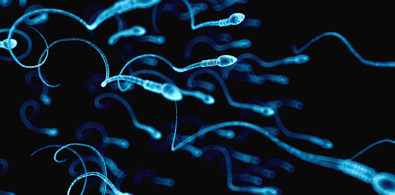 Кому удалось улучшить качество спермы